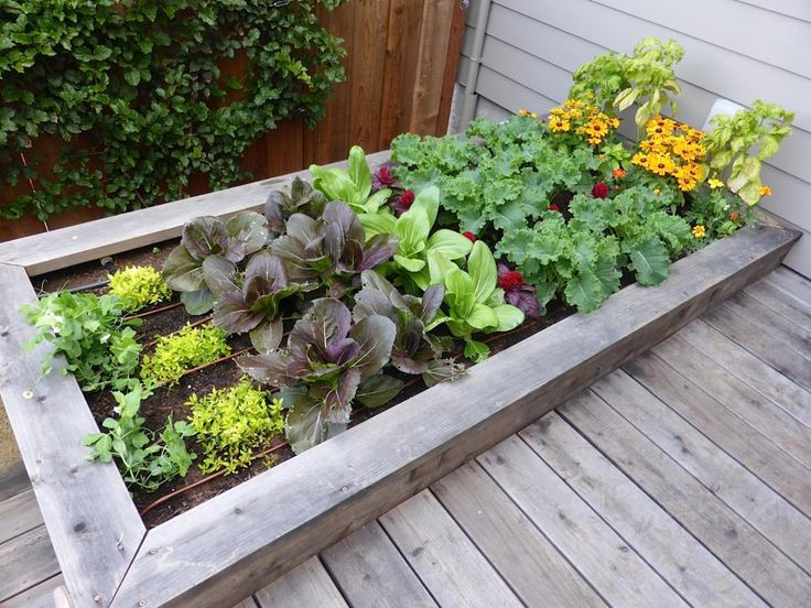 A family's raised vegetable and herb garden is positioned by St. John Landscapes to take advantage of sunniest area of a small urban garden in San Francisco.