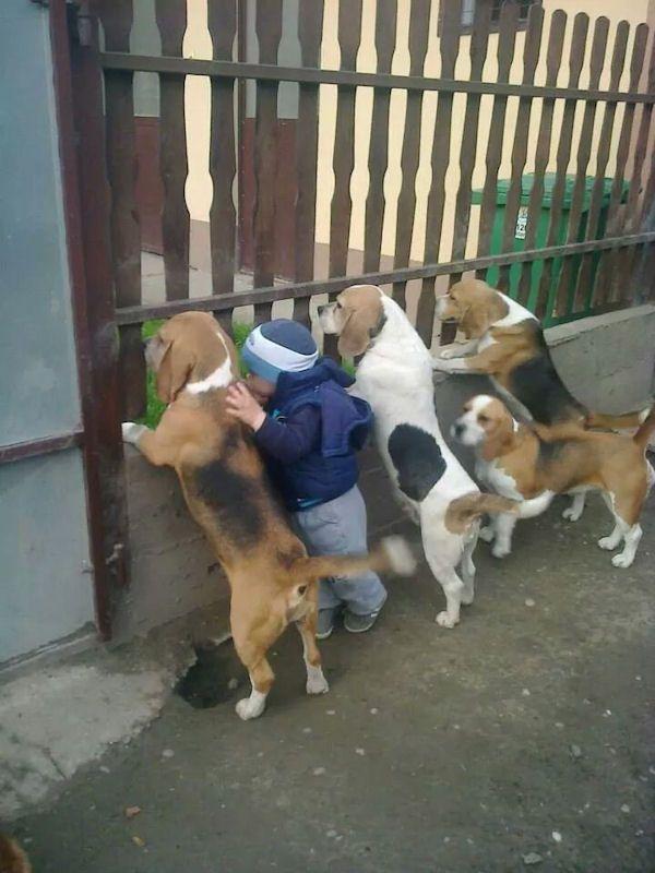 insolite chien curieux enfant palissade