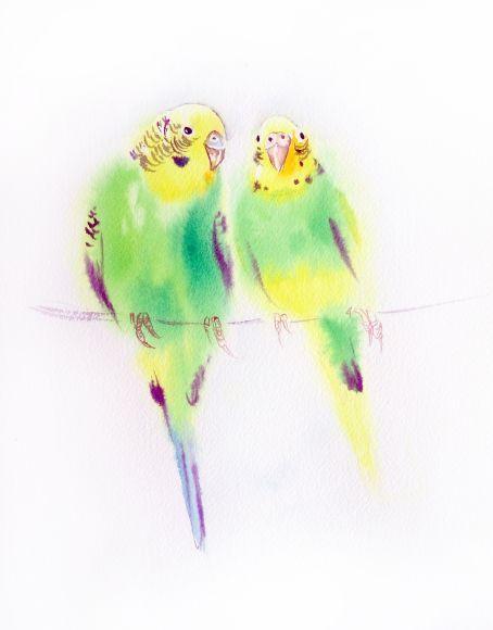 Кошек - люблю пару волнистый попугайчик попугай - картина, птица, птицы, пара, День Святого Валентина