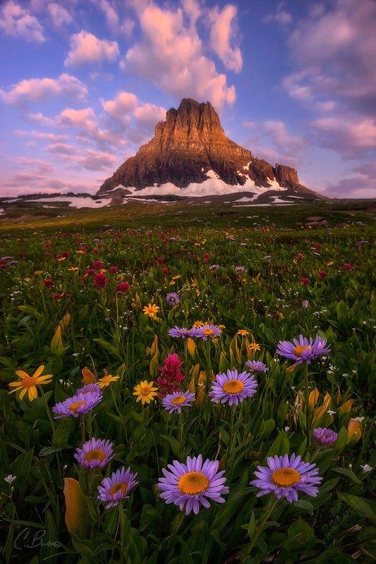 Wildflowers - Glacier National Park, Montana