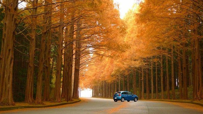 紅葉の並木道は最高のドライブコース!滋賀県「メタセコイア並木」
