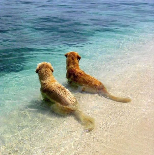Dogs Are Best Friends At The Beach