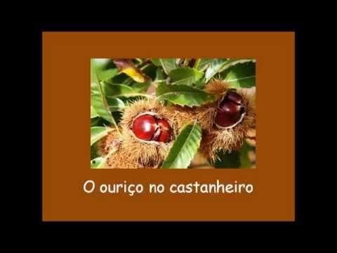São Martinho - O ouriço no castanheiro - YouTube