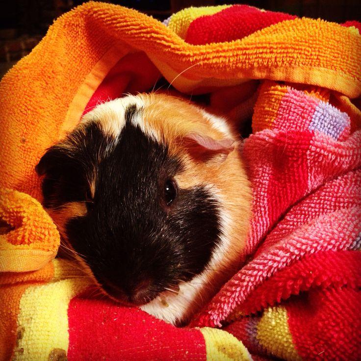 Pig in a blanket!
