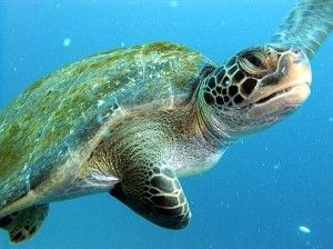 Top 10 Scuba Diving Spots in Costa Rica