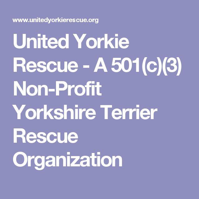 United Yorkie Rescue - A 501(c)(3) Non-Profit Yorkshire Terrier Rescue Organization