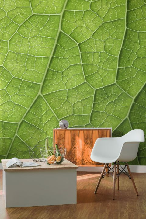 This detailed, vibrant design from Murals Wallpaper depicts a bright green leaf under the microscope. This head-turning display is for the bold and daring, but it wouldn't look out of place in a contemporary bathroom. Detailed Leaf Wall Mural, from £25.00 per m², Murals Wallpaper