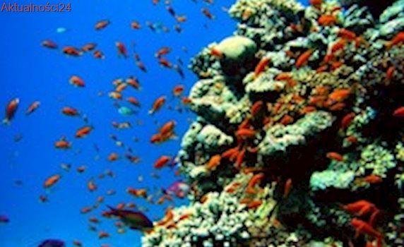 Wodne gatunki w Morzu Śródziemnym zagrożone