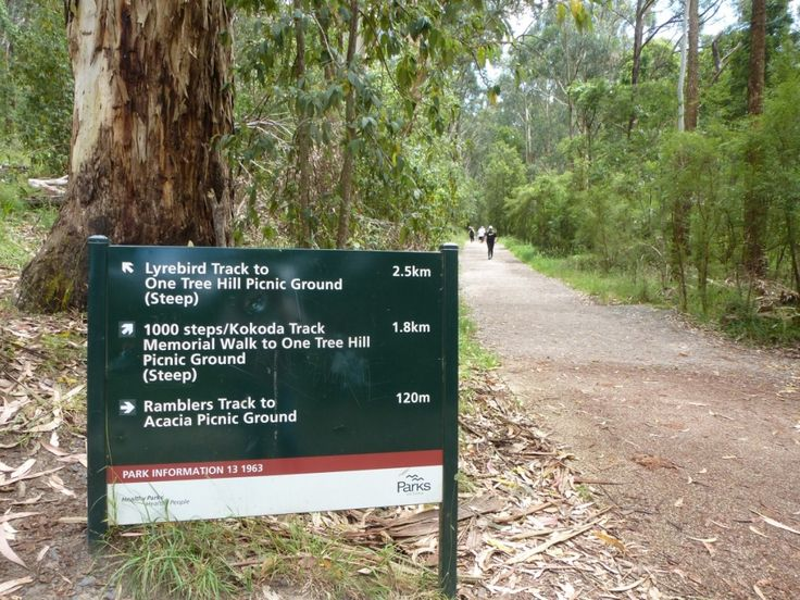 The 1000 Steps Walk in the Dandenong Ranges is also known as the Kokoda Memorial Walk. It is a beautiful walk near Melbourne and easy to access via public transport.