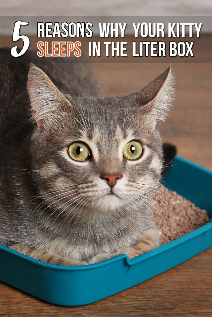 Felineliving Net Cat Behavior Cat Sleeping Bad Cats