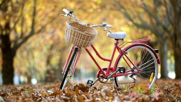 Розовый велосипед с корзинкой на руле, стоит на дороге усыпанной желтыми листьями на фоне деревьев