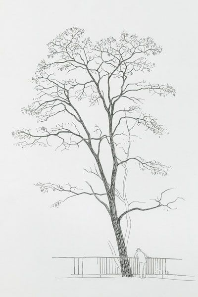 13 best olivier arbre images on pinterest for Faux olivier arbre