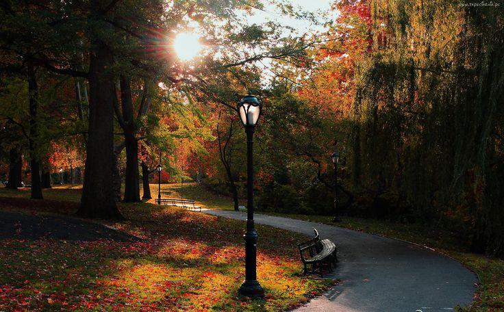 Jesień, Park, Alejka, Nowy Jork