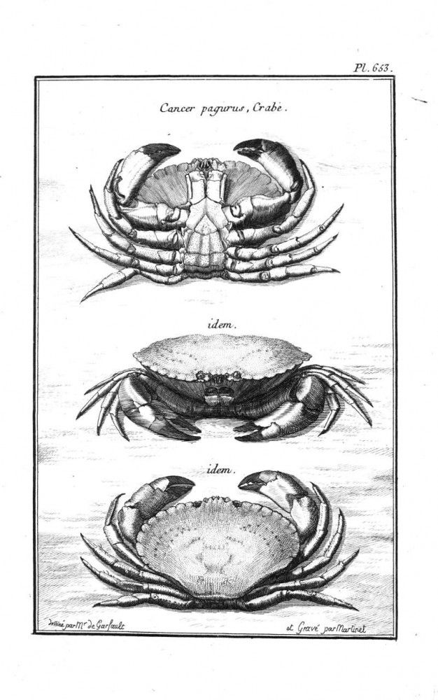 LOADS of FREE Printables on this site!  Vintage shellfish print