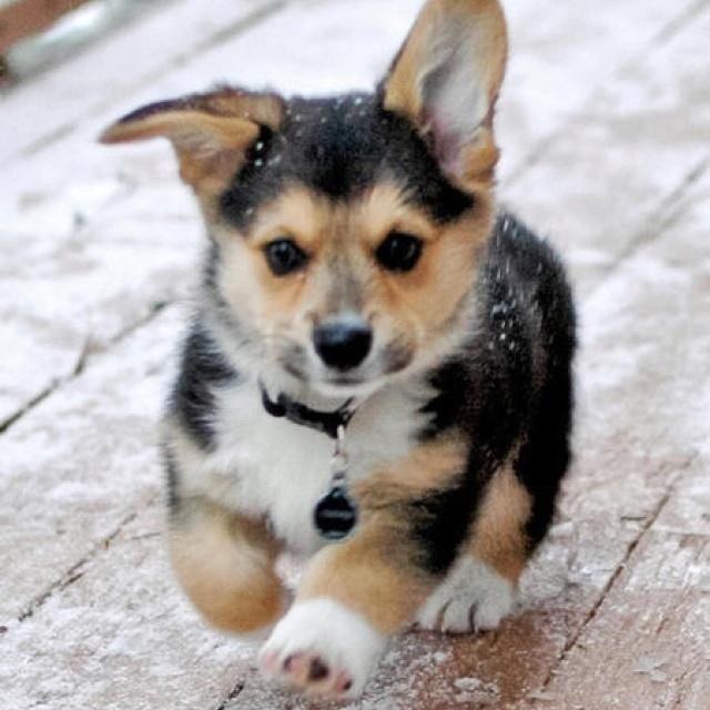 Little puppy running so cute!