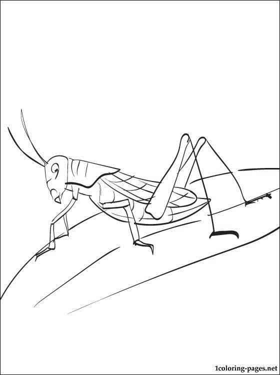 18 best Grasshopper Coloring Pages images on Pinterest Coloring