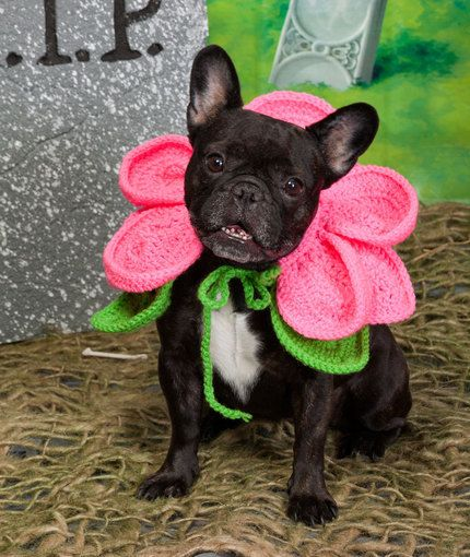 handmade crochet halloween blooming dog costume - Dog Halloween Ideas
