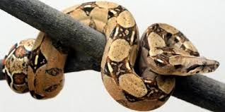 Hasil gambar untuk ular
