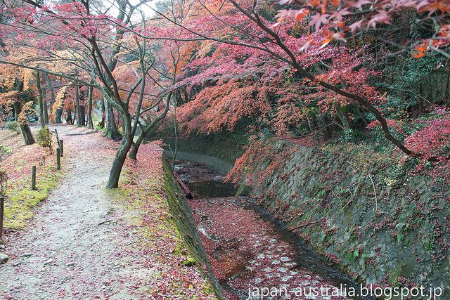 Almost the end of the Autumn Leaves in Gifu! This shot was taken on the weekend at Eihoji Temple in Tajimi City.