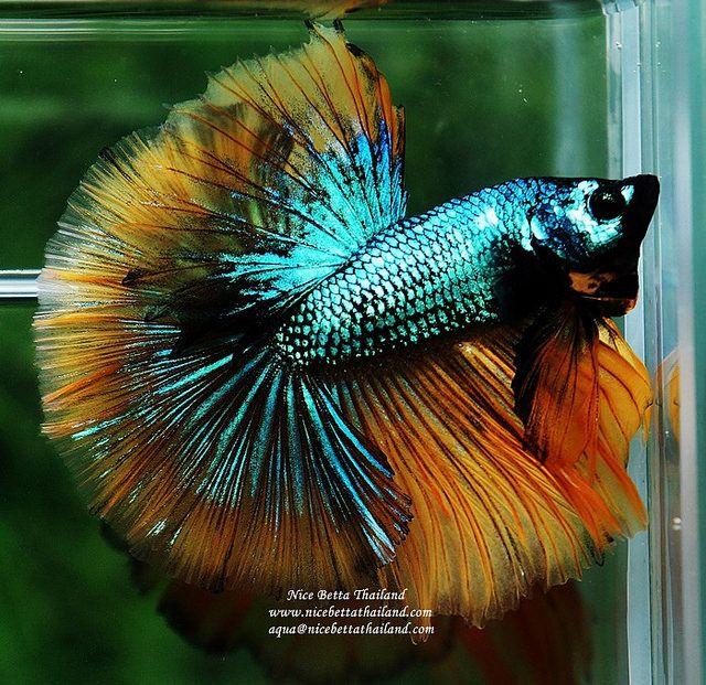 Home Aquarium Youaqua Aquarium Lovefish Aquariumproducts Tropicalfishstore Tropical Fish Store Home Aquarium Fish Pet