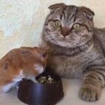 Cat's mind blown by hamster's dining choices