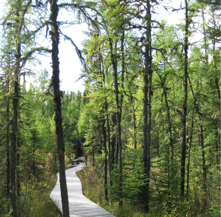 The trails of Prince Albert National Park lead to beautiful wilderness and lakeside scenery, as well as gooey bogs that are, surprisingly, good for the skin.