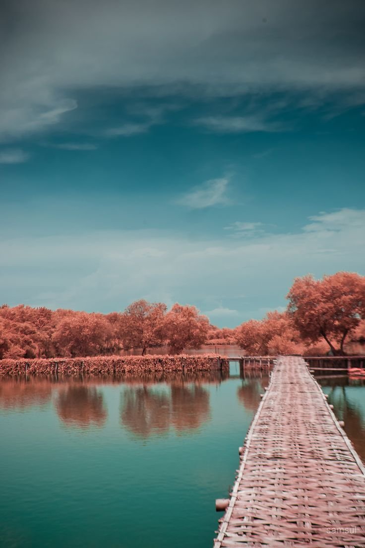 this is the mangrove park in surabaya, east java, indonesia