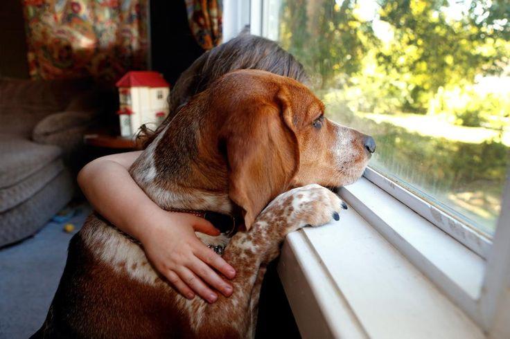 Should You Buy #Pet #Insurance Through Your Employer? #petlovers