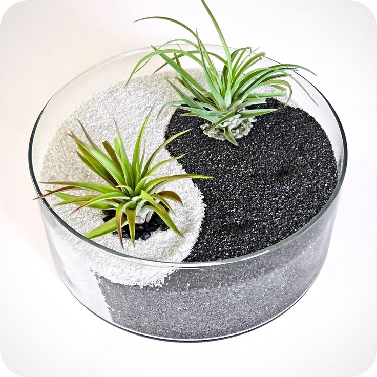 Align objects with Yin and Yang terrarium. $75.