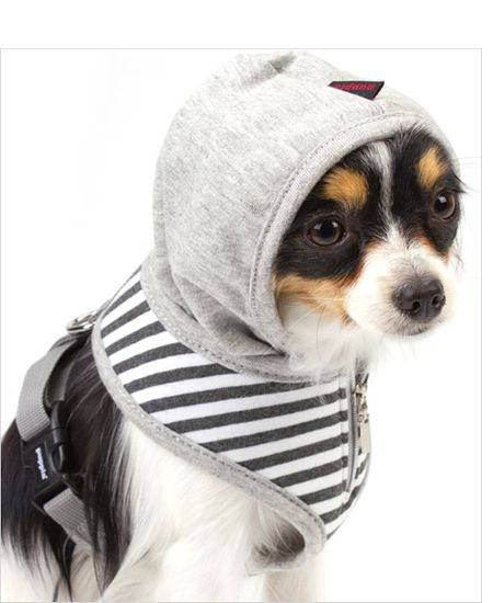 Harness their power: 9 of the best dog harnesses for your pampered pooch
