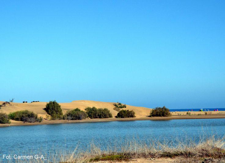 Dunas de Maspalomas¡¡  y charca de Maspalomas¡¡ isla de Gran Canaria¡¡ MCGA¡¡