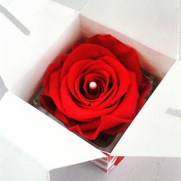 979 best images about f tez la saint valentin on pinterest for Livrer une rose