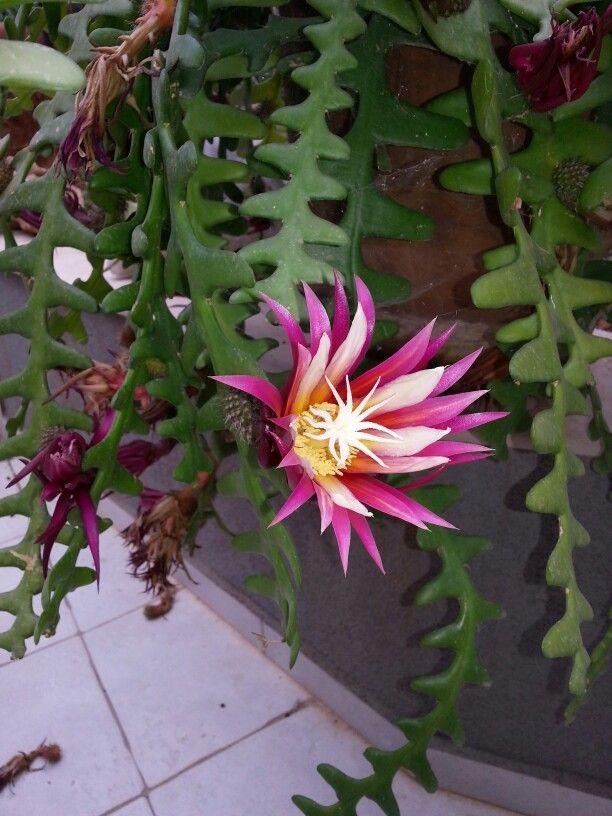 Beautiful flower in my garden