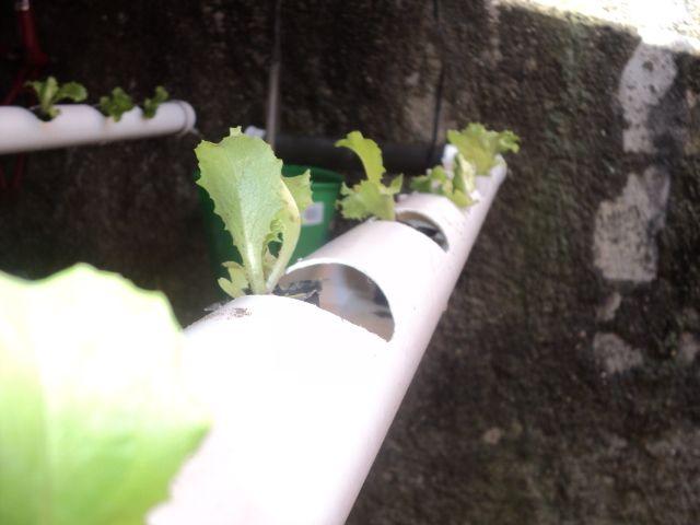 Las 25 mejores ideas sobre hidroponia casera en pinterest for Imagenes de hidroponia