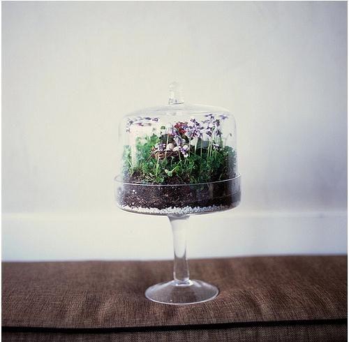 19. Cake Stand Terrarium