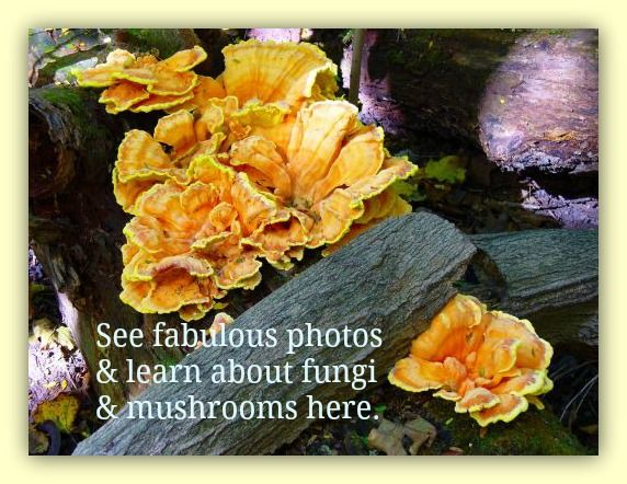 Pictures of Mushrooms and Fungus - Wild Ones!