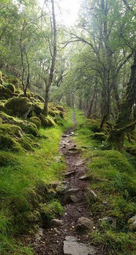 18 Super-Ideen für Fotografie Natur Waldspaziergänge   – Nature G