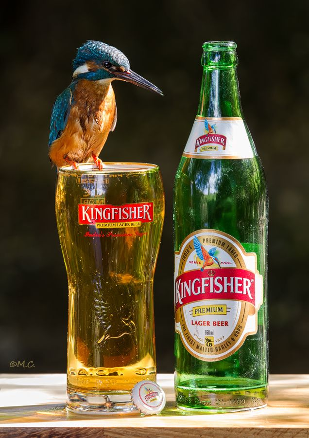 Kingfisher premium lager, 4.8% 5/10 India's number 1 beer.