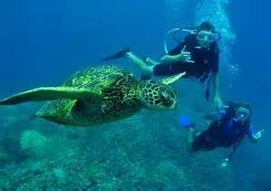 Maui Hawaii Scuba Diving