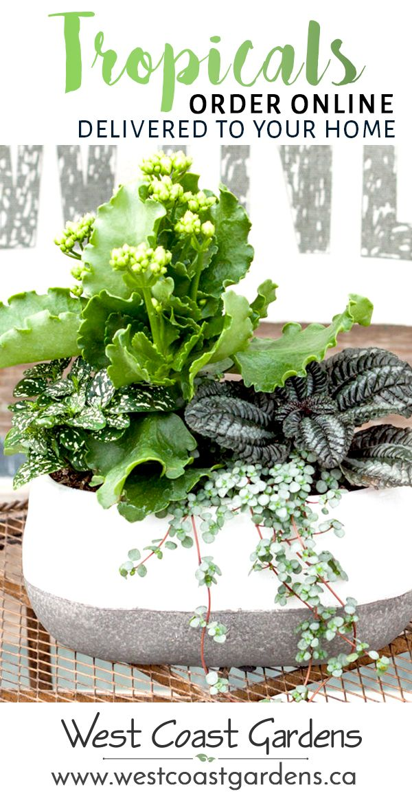 Order your indoor (and outdoor) plants online and have them carefully delivered to your home! Shipped throughout the BC Lower Mainland. - West Coast Gardens - www.westcoastgardens.ca #succulent #plants #garden