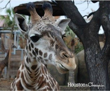 College student living on the Cheap in Houston_Zoo