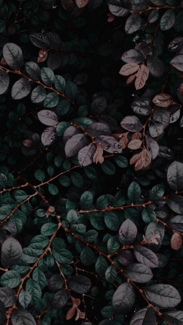 dunkle Pflanzen #wallpaper #Lockscreen