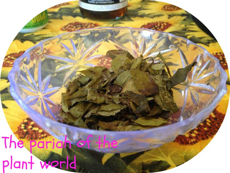 Coca Tea Benefits, Myths, and Where to Buy