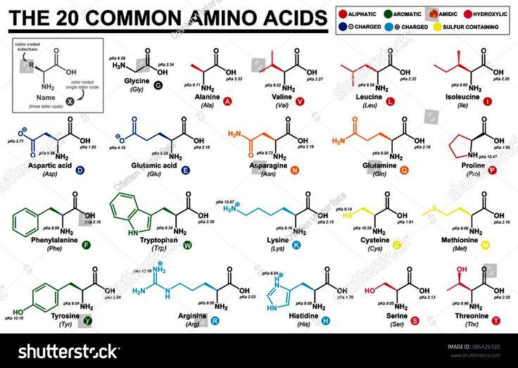 29 best Amino Acids images on Pinterest Amino acids, Organic - amino acid chart