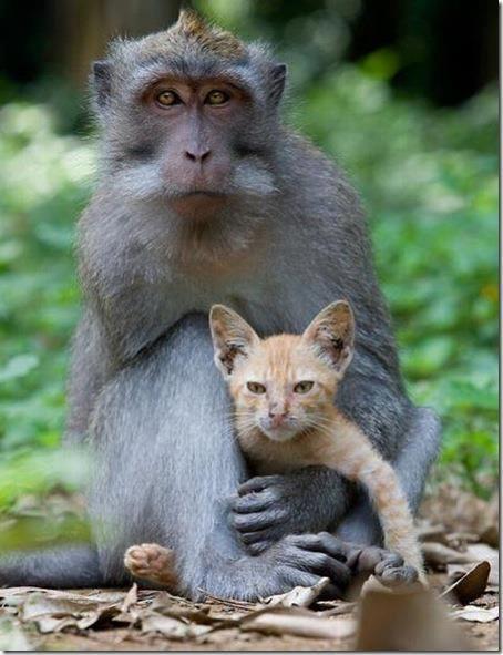 Beide Tierarten auf diesem Bild werden von den Menschen regelmäßig in Tierversuchen gefoltert und getötet.     Wir wünschen uns eine Welt, in der wir mit allen Lebewesen friedlich zusammen leben können.    Eine Welt, in der wir sie nicht mehr für ihr Fleisch, ihre Haut, ihre Milch oder Eier oder für unsere Unterhaltung ausbeuten und umbringen.    Lasst uns in Freundschaft und Achtung mit den anderen Lebewesen auf diesem Planten zusammenleben.     www.animalequality.de/speziesismus