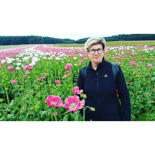 #mohnblüte #mohn #poppyseed #armschlag #mohnfelder #waldviertlergraumohn #waldviertel