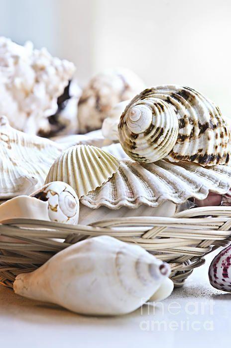 sea shells display - Coastal Style Blog
