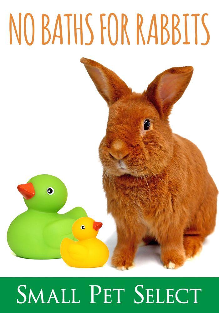 Can You Bathe A Rabbit No Don T Bathe The Bunnies Rabbit