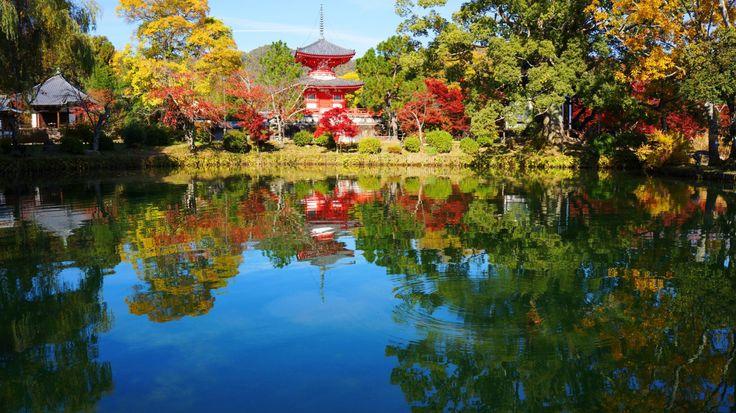 大覚寺の紅葉の2017年の見頃は?ライトアップやアクセス・見所も