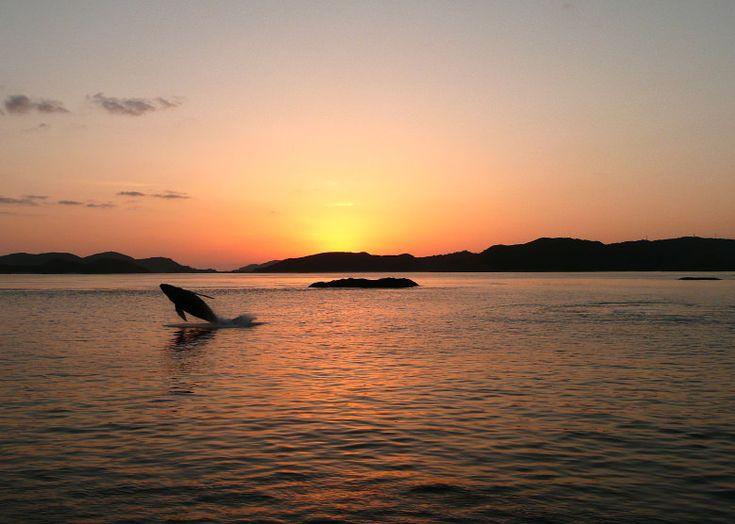 ホエールウォッチング / Whale watching